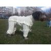 Комбинезоны от клещей - пыльники для собак